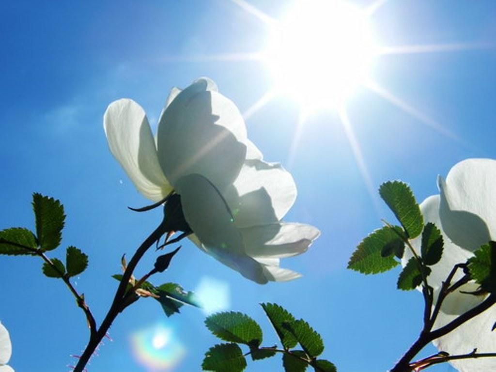 Картинки цветов и солнца 4